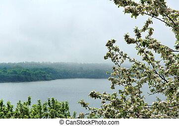 fioritura, albero, in, il, nebbia