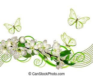 fioritura, ciliegia, ramo, con, fiori bianchi