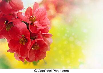fioritura, giapponese, crabapple