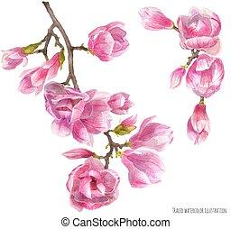 fioritura, magnolia, ramo