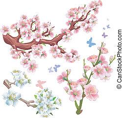 fioritura, set, rami