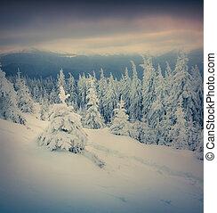 fir, 山, 冬季, 冻结, 树, 小