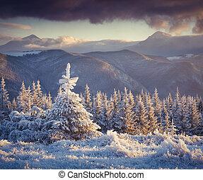 fir, 山, 冬季, 冻结, 树, 小, 日出