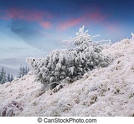 fir, 山, 冬季, 冻结, 树, 日落, 小