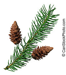 Fir pine branch and pine cone isolated on white