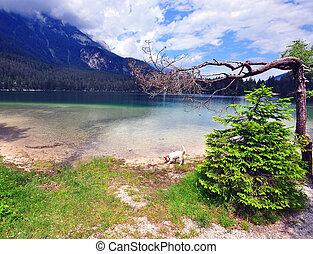 Fir ar the lake