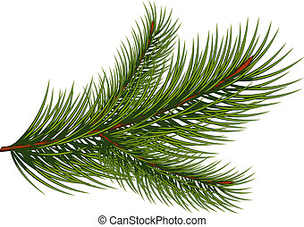 Fir branch over white background