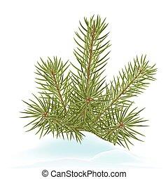 fir, branch, dekoration, stak, ind, sne, -, forkølelse, wintertime
