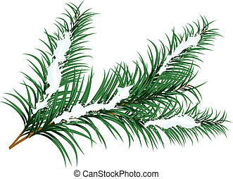 fir branch - Fir branch with snow flakes for use in web...