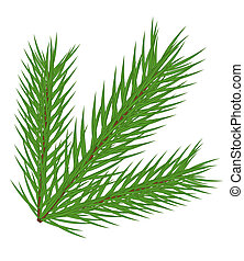 Fir branch - Vector fir branch isolated