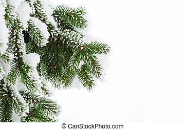 Fir branch on snow