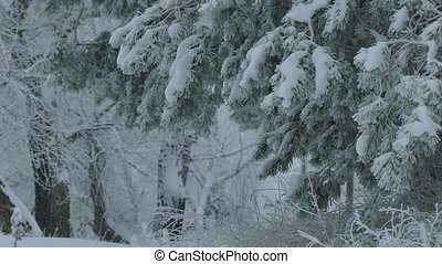 fir branch trees in snow wild forest Christmas winter snowing