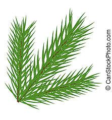 Fir branch - Vector fir branch isolated