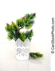 fir branches in vase on a white background