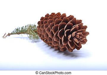 fir cone