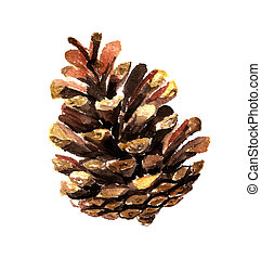 Fir cone watercolor - Watercolor image of fir cone on white...