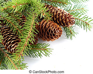 fir cones on the branch from Finland