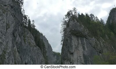 Fir Forest on High Cliffs - Pan shot from ground of the the...