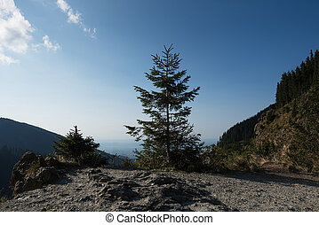 Fir in summer season on peak of mountains on blue sky background