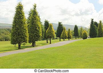 Fir lined trees
