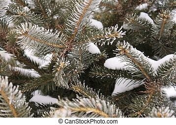 Fir, snow, frost, hoarfrost, background
