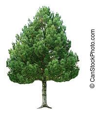 fir træ