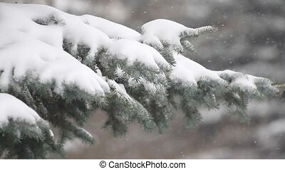 Fir tree and falling snow in the forest