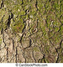 Fir tree bark texture.