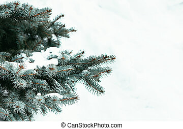 Fir tree branch covered with snow in winter time