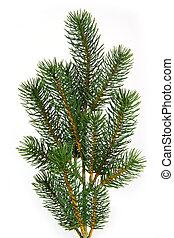 Plastic fir tree branch isolated on white background