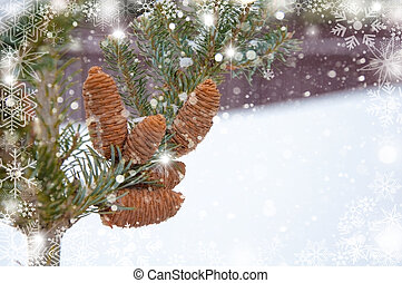 fir-tree branch with cones. winter background