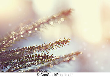 Fir-tree branches in the stiffened drops of ice