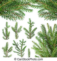 Fir tree branches - Set of fir tree branches isolated on...