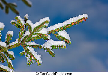 branches under snow