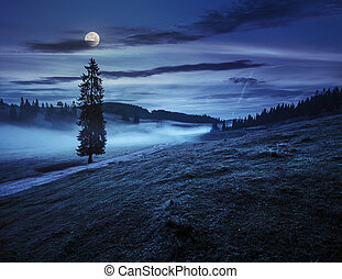 fir tree in fog by the road  in mountains at night