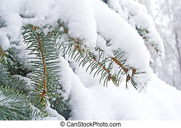 Fir-tree in snow weather