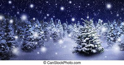Fir tree in snowy night