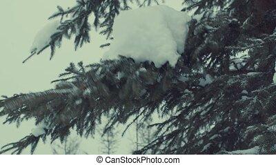 Fir tree in the snow, snowfall. - Fir tree in the snow. Snow...