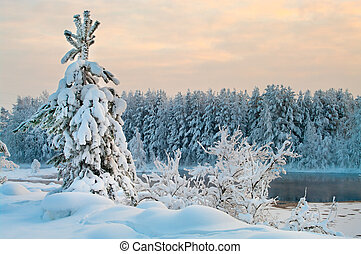 Fir tree in winter forests of Karelia, Russia. Black water...