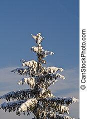 Fir tree in winter