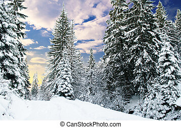 fir-tree, inverno, floresta