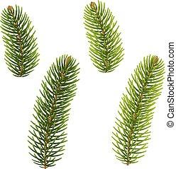 Fir Tree Isolated, Vector Illustration