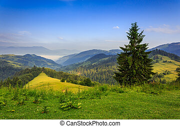 tree on the edge of clearing in mountains - fir tree on the...
