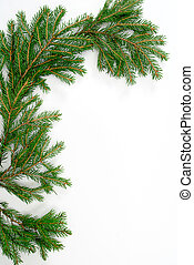 green fir tree twig isolated on white background