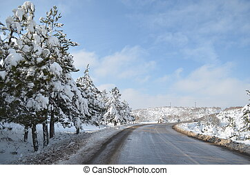 fir-tree under snow cap in winter near the road