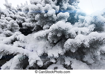 Fir-tree under snow