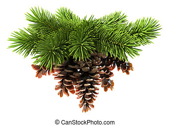 Fir tree with pine-cones isolated on white background