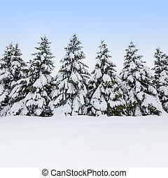 Fir trees covered by snow, winter beauty