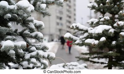 Fir trees in  city park at the winter