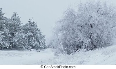 fir trees in snow Christmas wild forest winter snowing
